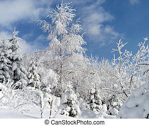 Sparkling snow (1)