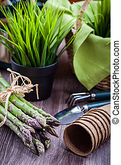 sparris, grön, redskapen, Trädgård, frisk