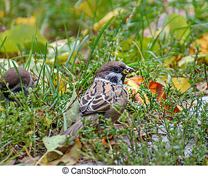 Sparrow among the green grass