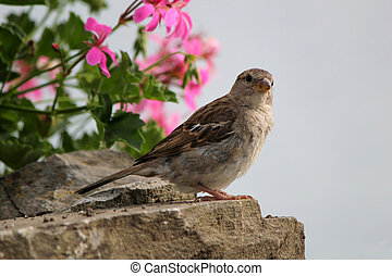 Sparrow and pink flowers