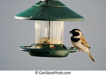 Sparrow at bird feeder