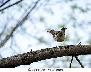 Sparrow bird.