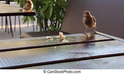 Sparrow bird flying eating bread pieces cafe table summer