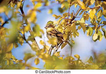 Sparrow Bird Hideout
