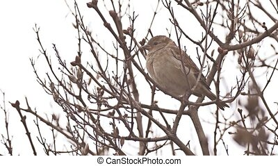 sparrow bird sitting on a branch nature tree