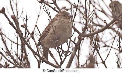 sparrow bird sitting on branch nature tree