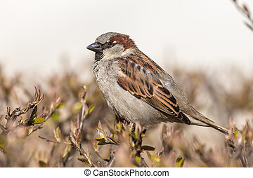 sparrow close up