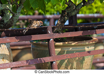 Sparrow dried in the sun.