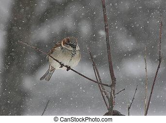 Sparrow in a Snowstorm