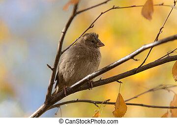 sparrow in autumn closeup