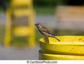 Sparrow in park