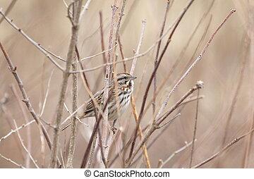 sparrow in weeds