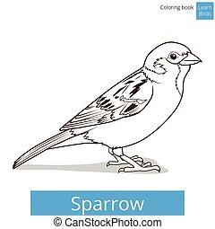 Sparrow learn birds educational game vector illustration