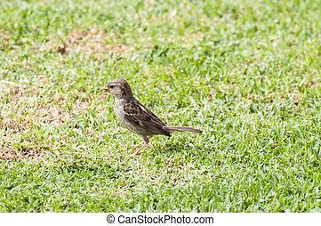sparrow looking