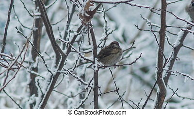 Sparrow on a Branch 2
