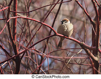 Sparrow on a branch in the forest