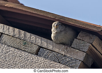 Sparrow on a building roof