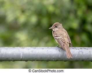 Sparrow on a Gate