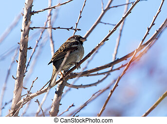 Sparrow on a tree against the blue sky