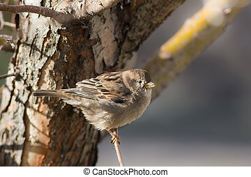 sparrow on a tree branch
