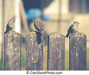 sparrow on a wooden fence