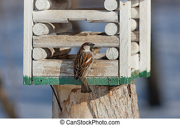 sparrow on a wooden lodge
