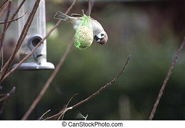 Sparrow on Bird seed