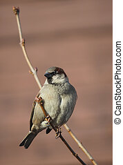 Sparrow on branch