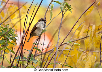 Sparrow on branch, tree sparrow