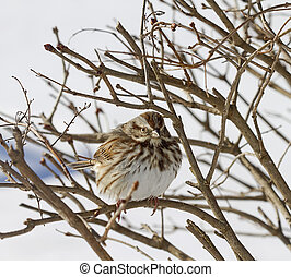 Sparrow on Branches