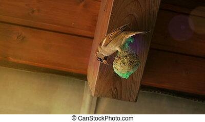 Sparrow on seed-ball