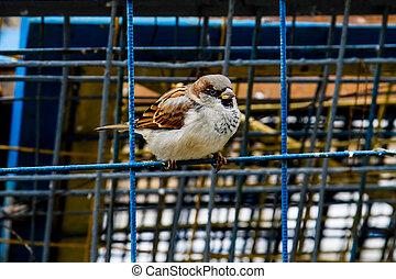 Sparrow on the net fence