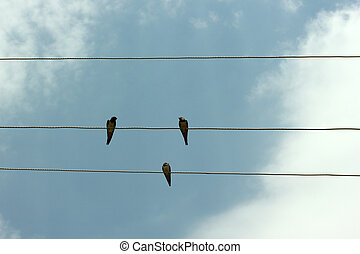 Sparrow on the wire