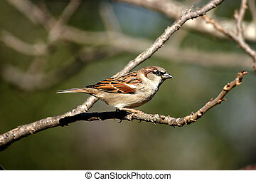 Sparrow perched on a branch