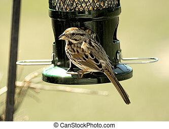 Sparrow Perched on Birdfeeder, Closeup