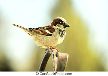 Sparrow perched on pole