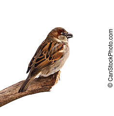 Sparrow Profile