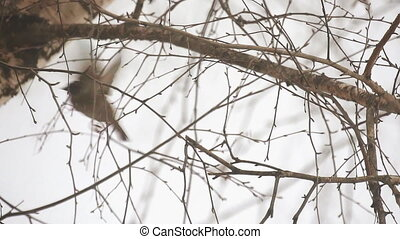 Sparrow sits on a branch. It's snowing. Sparrow flies away....
