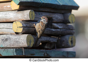 sparrow sits on a wooden house