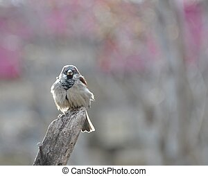 Sparrow sits on an old wooden beam, basking in the sun, vigilantly peering.