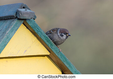 sparrow sits on the roof