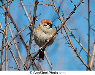 sparrow sitting on a branch against a blue sky