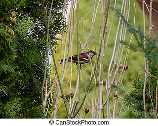 Sparrow sitting on a branch in the bushes