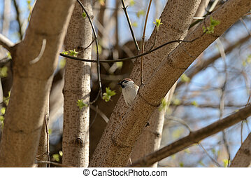 Sparrow sitting on a tree branch on a spring day
