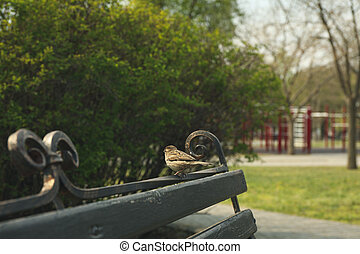 Sparrow sitting on bench in park. Springtime