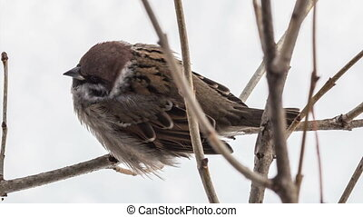 Sparrow - sparrow sitting on a tree branch