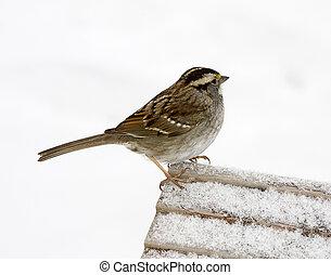 Sparrow Winter