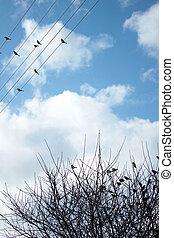 sparrows, дерево, филиал
