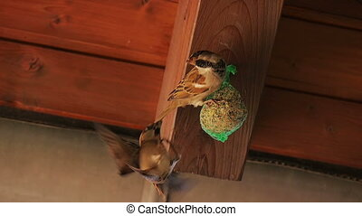 Sparrows fly away from seed-ball - A little sparrow takes a...