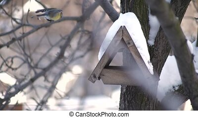 Sparrows fly to the bird feeder in winter